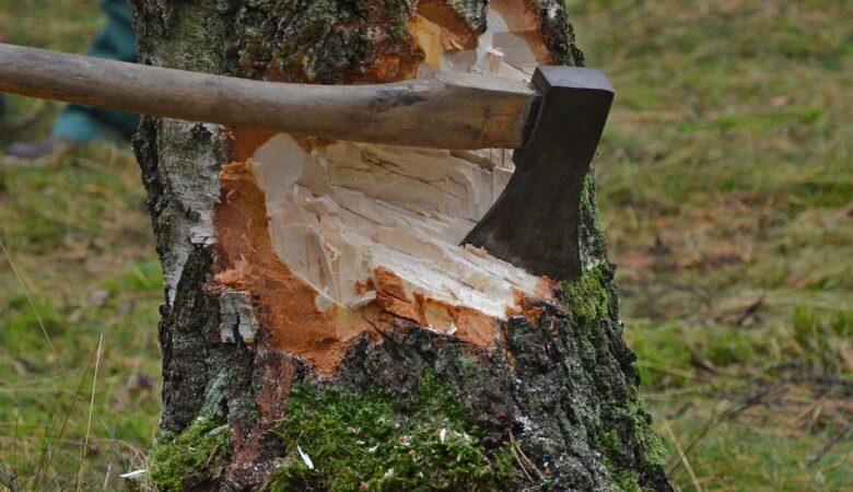 Mit roher Handarbeit ist einen Baum fällen immer noch am schönsten.