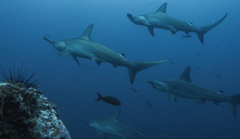Mit Haien schwimmen ist eine gefährliche aber spannende Bucket List Idee.
