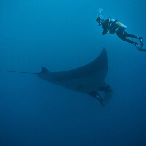 Mit Haien schwimmen