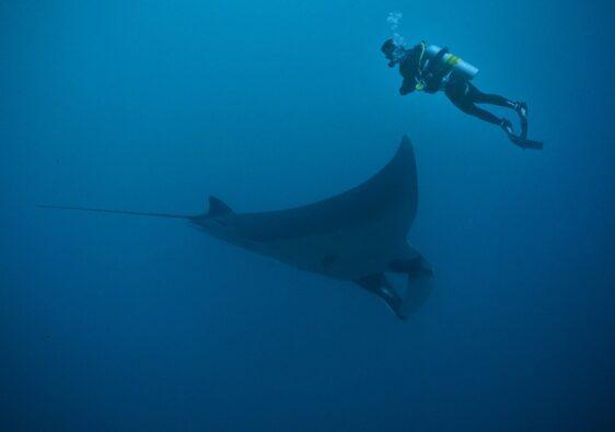 Mit Rochen schwimmen ist ein Traum vieler Menschen.