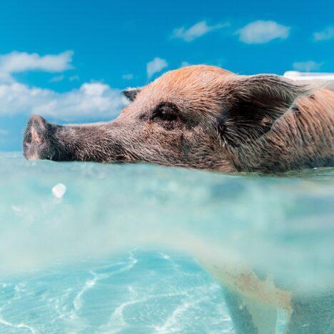 Mit Rochen schwimmen