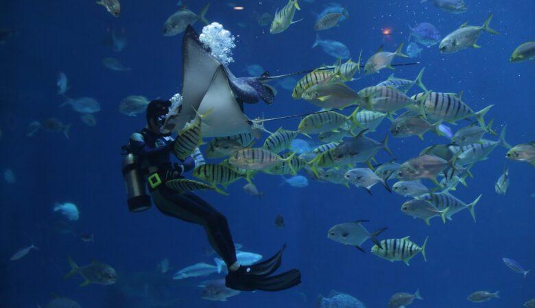 Man kommt beim Scuba Diving der Unterwasserwelt nah wie sonst nicht.