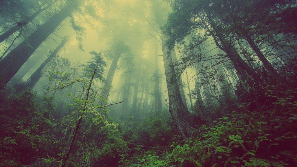 Bucket List Ideen Natur & Wildnis